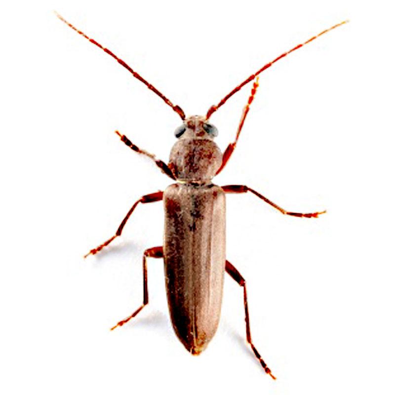 Identifying Beetle Species